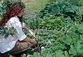 Frau kürzt lange Ranken von Kürbis (Cucurbita) ein, weil Seitentriebe mehr Ertrag bringen