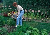 Erde mit Grabgabel umgraben, Schubkarre mit Gartengeraeten, Sommerblumen, Gemüsebeet mit Möhren, Karotten (Daucus carota)