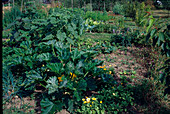 Entwicklung eines Gemüsegartens Anfang Juli