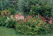 Filipendula purpurea / Purpur-Mädesüß, Astilbe / Prachtspiere, Eupatorium / Wasserdost, Salix alba 'Argentea'/ Weide