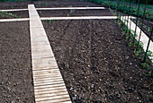 Entwicklung eines Gemüsegartens 1. Step: Anfang Juni