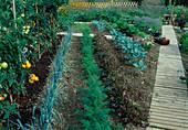 Entwicklung eines Gemüsegartens 3. Step: August
