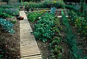 Entwicklung eines Gemüsegartens 5. Step: August