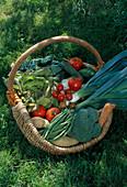 Korb mit frisch geerntetem Gemüse im Garten