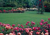 Rasenfläche gesäumt von Rosenbeeten, Rosa (Kletterrose) an Rankgerüst im Rasen