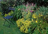 Sitzplatz am Beet, Lychnis coronaria (Vexiernelke), Alchemilla mollis (Frauenmantel) und Hemerocallis (TAglilien)