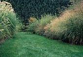 Rasenweg zwischen Gräserbeeten : Deschampsia cespitosa (Rasenschmiele),