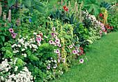 Sommerblumenbeet : Verbena (Eisenkraut), Petunia (Petunien), Amaranthus 'Ponytails' (Fuchsschwanz), Brassica 'Nero di Toscana' (Palmkohl), Agastache foeniculum (Duftnessel), Ricinus (Wunderbaum) und Dahlia (Dahlien)