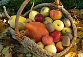 Erntekorb mit Kuerbissen (Cucurbita), Äpfeln (Malus) und Kiwi (Actinidia)
