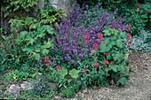 Blühender Salbei (Salvia officinalis), Centranthus ruber (Rote Spornblume), Alcea (Stockrosen), Primula (Primeln), Thymian (Thymus), Natursteine