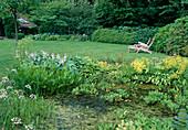 Gartenteich : Menyanthes trifoliata (Fieberklee), Oenanthe aquatica (Wasserfenchel), Pontederia cordata (Hechtkraut), am Ufer Alchemilla (Frauenmantel) und Hosta (Funkien), Holz-Liegestuehle auf dem Rasen
