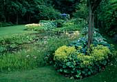 Teich mit Sagittaria (Pfeilkraut), Oenanthe aquatica (Wasserfenchel), am Ufer Alchemilla (Frauenmantel), Hosta (Funkien), Astilbe (Prachtspieren) und Gunnera manicata (Mammutblatt), im Hintergrund blauer Pavillon
