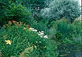 Wassergarten mit Iris (Sumpfschwertlilie), Hemerocallis (Taglilien) und Salix alba 'Argentea'(Silberweide)
