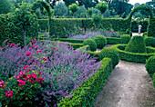 Formaler Garten mit Rosa ' Mozart' ' Ghislaine de Feligonde' (Rosen), Nepeta (Katzenminze), Buxus (Buchs) als Hecken, Kugeln und Rondell, Malus (Apfelbaum)
