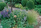 Stipa tenuifolia (Haargras), Salvia nemorosa (Steppensalbei, Ziersalbei), Amsonia salicifolia (Blausternbusch), Buxus (Buchs) kugelig geschnitten