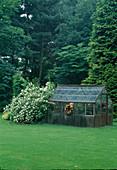 Philadelphus 'Belle Etoile'(Bauernjasmin, Pfeiffenstrauch) , Chamaecyparis lawsoniana (Scheinzypresse), älteres Gewächshaus mit Kranz