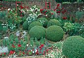 Rot-weisse Gartenecke mit Rosa (Rosen) Staemmchen, Buxus (Buchs) Kugeln, Argyranthemum (Margeriten) und Dianthus (Nelken), rote Holzleitern an Mauer