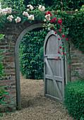 Rosa 'Felicite Perpetue' / Ramblerrose, einmalblühend, Rosa 'Russeliana'/ Kletterrose an Mauer mit offenem Gartentor