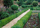 Weg durch Garten mit geschnittenem Buxus (Buchs) Staemmchen und Hecken, frisch gepflanztes Gemüsebeet, Stauden und Kräuter