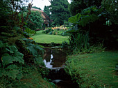 Bachlauf im Landhaus-Garten, Blick über Rasenfläche zum Staudenbeet, Gunnera manicata (Mammutblatt), Rheum palmaticum (Zierrhabarber) und Rodgersia (Schaublatt) am Ufer