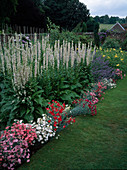 Verbascum chaixii 'Album'(weiße Königskerzen), Dianthus caryophyllus (Nelken), Nepeta (Katzenminze), Hemerocallis (Taglilien), Rasenweg