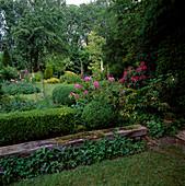 Centaurea (Flockenblume), Buxus (Buchs) Hecke und Kugeln , Rhododendron (Alpenrosen), Digitalis (Fingerhut) und Geranium (Storchschnabel)