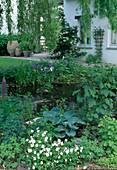 Teich mit Viola cornuta (Hornveilchen), Geranium (Storchschnabel), Ruta graveolous (Weinraute), Hosta (Blaublatt-Funkie), Iris (Sumpfschwertlilie), Hydrangea petiolaris (Kletterhortensie) am Haus
