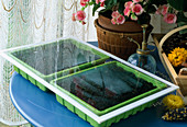 Gemüseaussaat 8. Step: Fertige Aussaat mit Glasscheibe (erhöht Luftfeuchtigkeit) abdecken und an warmen Ort stellen