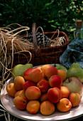 Teller mit frisch gepflückten Aprikosen, Äpfeln und Birnen