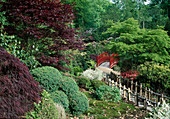 Japanischer Garten mit roter Brücke und Acer palmatum 'Atropurpurea' und 'Dissectum Garnet'/ Fächerahorn und Schlitz- Ahorn