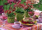 Frühstück aus der Terrasse mit Tausendschön