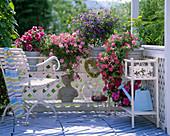 Blumenbänke mit Petunia 'Double Pirouette' -