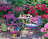 Hydrangea ' Cote d'Azur' - ' Amsterdam ' - ' Adria ' (Hortensie)