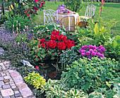 Miniteich mit Frosch, Rhododendron