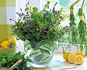 Mentha (peppermint), lavandula (lavender)