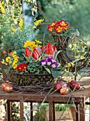Eierkörbe mit Primula acaulis / Kissenprimel