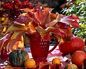 Parthenocissus / Blätter vom Wilden Wein in roter Kanne, Cucurbita / Kürbisse. K