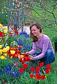 Beet mit Tulipa (Tulpen), Muscari (Traubenhyazinthe)