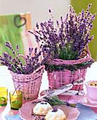 Lavandula (Lavendel) in rosa Korbtöpfen