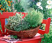 Kräuterkorb bepflanzen