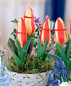 Tulpenblütenköpfe mit Band zubinden, damit sie nicht aufblühen,
