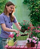 Grünen Ampelkorb bepflanzen