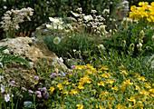 Steingarten mit Hypericum rhodophaeum (Johanniskraut)