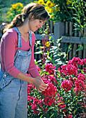 Junge Frau zupft Blüten von Phlox paniculata (Flammenblume)