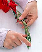 Damit Gladiolus (Gladiole) schön aufblühen