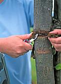 Kokosschnur um Baum entfernen