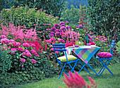 Hydrangea (Hortensie), Astilbe (Prachtspiere)