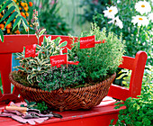 Planting herbs in the basket