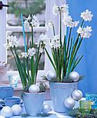 Narcissus tazetta (Tazette) in blauen Töpfen mit silbernen Kugeln