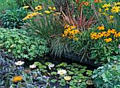 Miniteich im Garten mit Nymphea (Seerose) und Schwimmkerzen